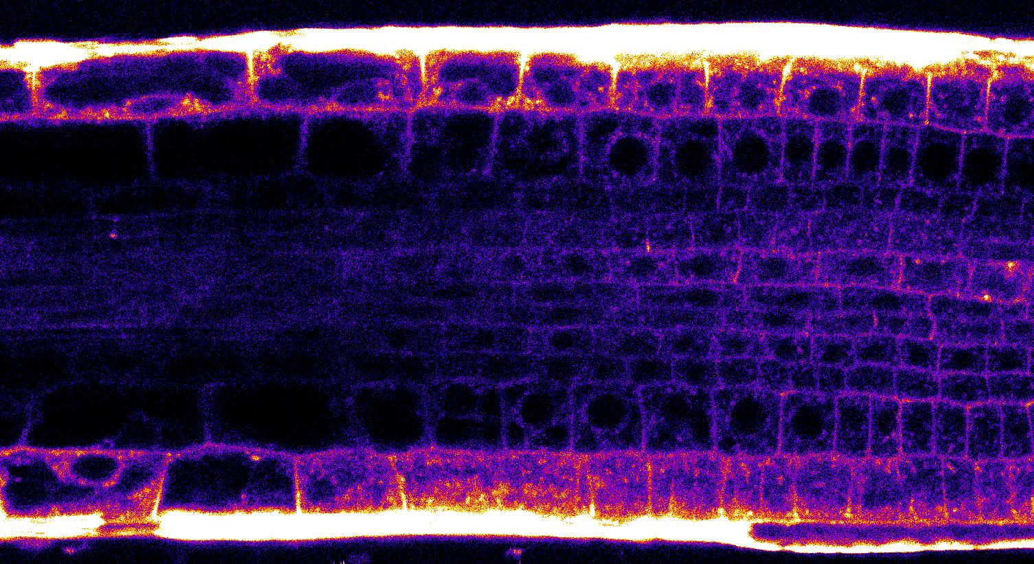 Obr.1 2 photon 40x photonCounting tz 2